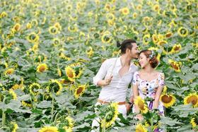米兰尊爵寻梦园花海之太阳花