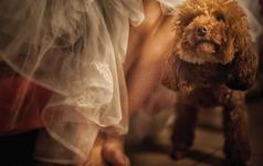 【婚礼那些难以忘怀的瞬间】--婚礼纪实拍摄