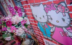 【缘圆婚礼】可爱,甜美KT猫