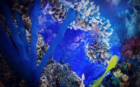 海底的幻想-「MOHO幕候婚礼」
