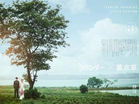 【唯一】花漾---薰衣草