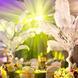 王妃婚礼策划  维景酒店¥25000元套餐
