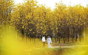 【2天拍摄+星级酒店】奢、韩、欧、旅拍纪实婚纱照