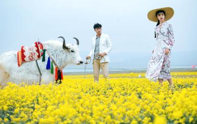 青海湖+沙漠+公路+草原风情+补贴机票