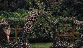 承蒙你出现,够我欢喜好多年 - 法式田园户外婚礼