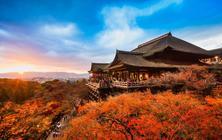 日本旅拍 红叶档期丨京都奈良东京可选+专车出行