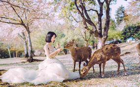 日本京都奈良婚纱旅拍【一天拍两城】