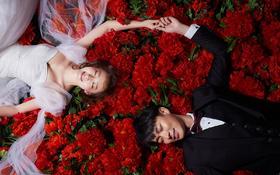 【喜匠摄影】---花团景簇