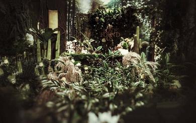 【诺时尚】婚礼策划——丽晶|月光森林