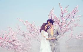青岛秘密花园   樱花主题   看樱花来青岛