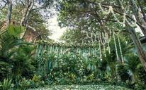艾恩婚礼 | 森系热带雨林婚礼