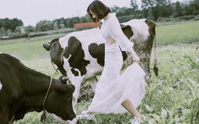 【城市旅拍】限量奶牛牧场♥夏日狂欢夜景0元免费拍