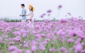 苏梵私人定制婚纱摄影—花海
