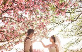 浪唯美花海和浪漫海景婚照的完美结合