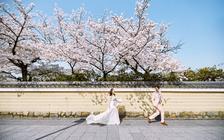 日本旅拍樱花档期丨专车出行+精修60张+全国包邮