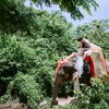 与大象亲密作伴,分享我们的泰国旅拍~