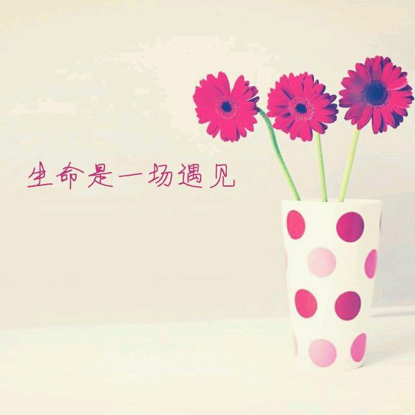 ~_爱的薰衣草.