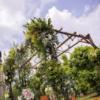 最美的花季用最美的花诠释——7.29婚礼纪实
