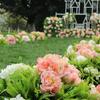 【草坪婚礼】——绝对是春夏首选~