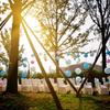 欢乐谷超小户外婚礼,也能简洁精致有内涵