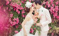 蔷薇系类장미婚纱照