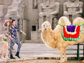 骆驼——特色婚纱照
