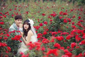 浪漫玫瑰/香草园婚纱照