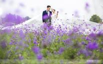 玫瑰星座--花海婚纱摄影盛宴