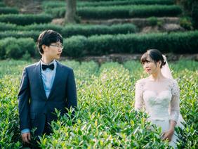 种影像客片|依偎茶田——杭州旅拍