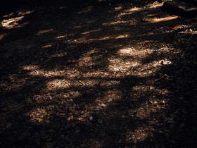 长沙纯色摄影——森系公主风