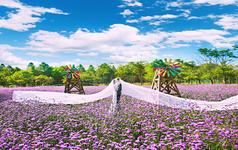 【原野印像】特惠马场游艇爱菲尔基地拍摄送鲜花造型