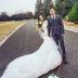纪实公路婚纱结婚照