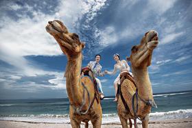 """【岛多多全球婚纱摄影】巴厘岛超级""""网红""""骆驼夫妇"""