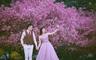 樱花季海棠花+服装不限+VIP接机+精致酒店