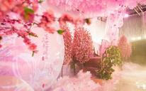 【夭蕊婚礼】— 十里桃花