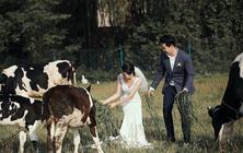 【大咖视觉/奶牛牧场】经典奶牛牧场