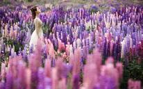 纪实公园婚纱照(纽约纽约新西兰旅拍)
