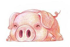 本命年想结婚?属猪本命年可以结婚吗?