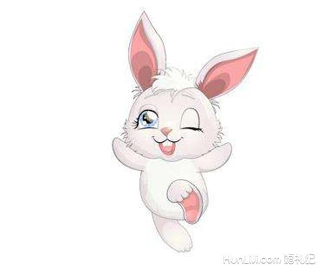 欢乐兔和猪图片