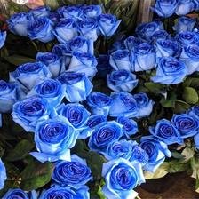 蓝色玫瑰代表什么,适合送女友吗
