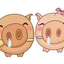 猪和什么属相最配