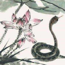 属蛇的和属蛇的结婚好不好