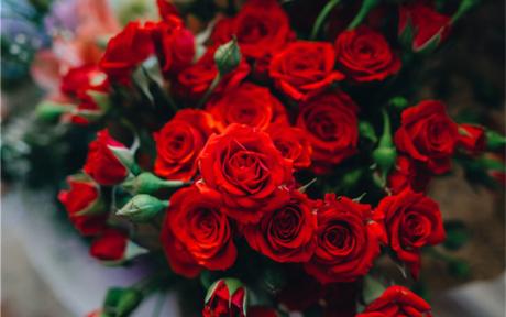 送玫瑰花朵数的含义大全 圣诞节送女朋友玫瑰花多少朵合适