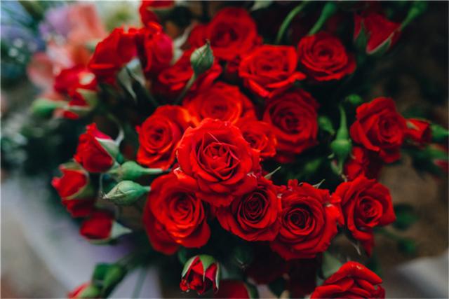 送玫瑰花朵数的含义大全 七夕节送女朋友玫瑰花多少朵