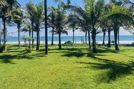 椰林小草坪