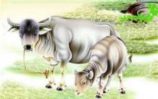 属虎的和属牛的婚姻合适吗