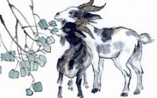 属羊男和什么属相最配 属羊男最全的属相婚配表