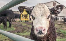 85年属牛的属相婚配表是什么样的