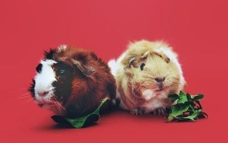 属鼠和属鼠的合不合 两个属鼠的人白菜网免费领取体验金好吗