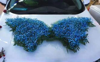 婚车用花,即花大、色艳、新鲜、寓意好